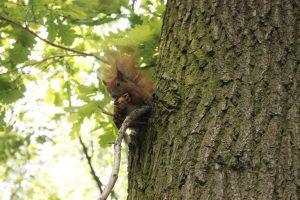 Es gibt zahlreiche Tiere im Łazienki-Park: Neben Eichhörnchen, blaue Pfaue und andere Vogelarten. © Natalie Junghof