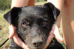 Hund Schnuffi fühlt sich in den Feldern und Wäldern von Oberschlesien Zuhause. © Ellen Junghof
